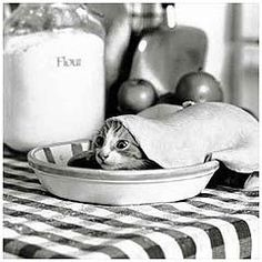 Black and white photograph of a kitten covered by pie dough in a pie. For Comfort Reads by Malin James